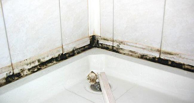 Плесень и грибок в ванной